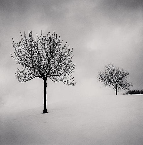 A Pair of Trees, Dearborn, Michigan, USA. 1995